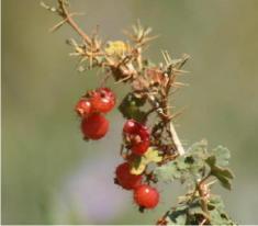 24 - Gooseberry (Utah)